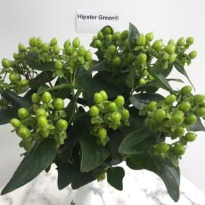 Hipster Green (verhipgreen)®